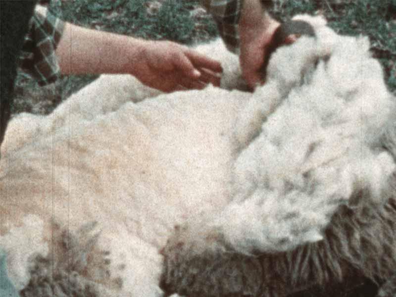 lana e canapa